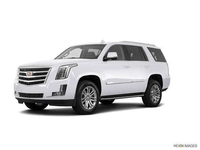 2019 Cadillac Escalade Vehicle Photo in Gainesville, GA 30504